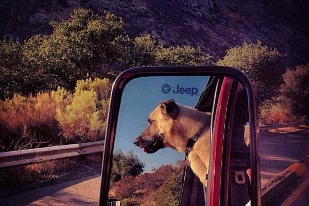 Jeep wrangler and dogs family adventure